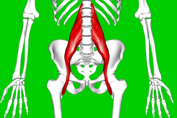 How Massage Therapists Can Remove Discomfort From Psoas Treatments