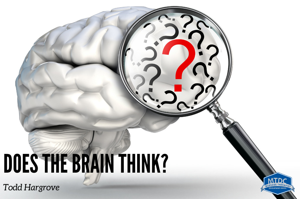 does the brain think